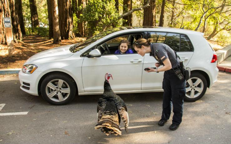 Picture of Parking Enforcement